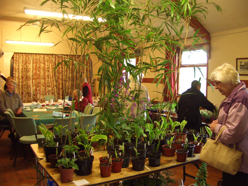 Plant Swap May 18th 2013 1